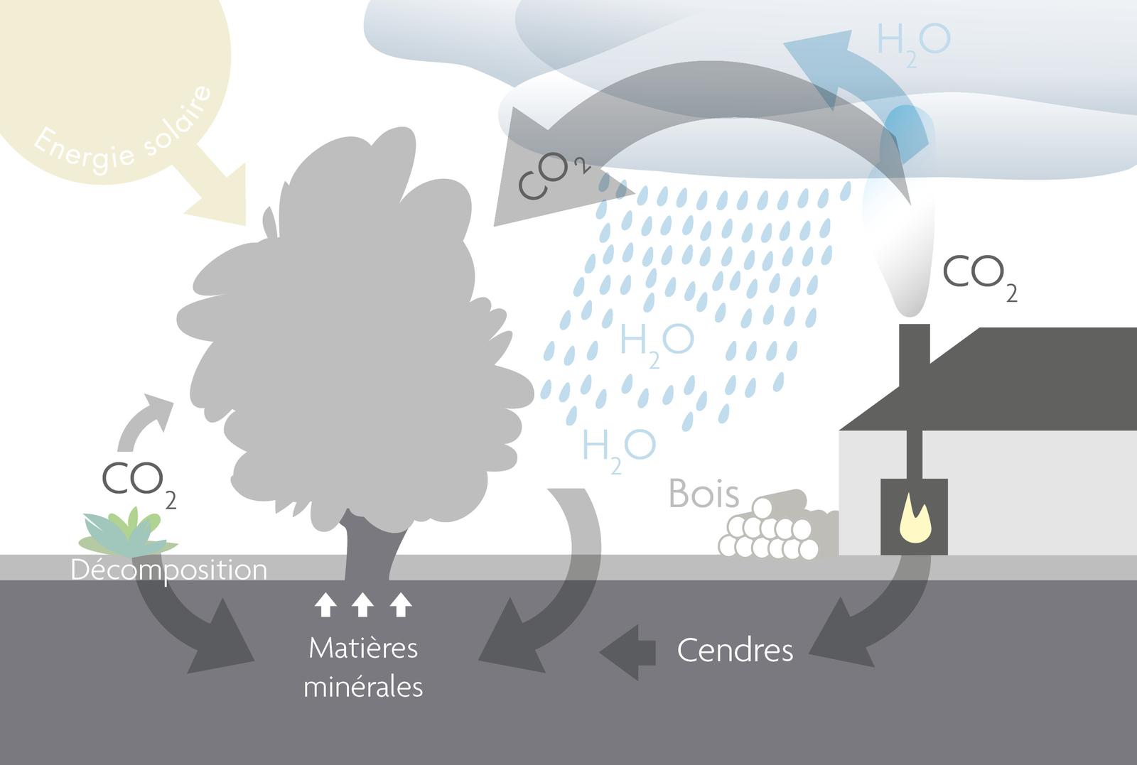 Cycle du bois schéma explication