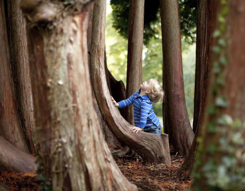 LORFLAM enfant arbre économie énergie bois de chauffage