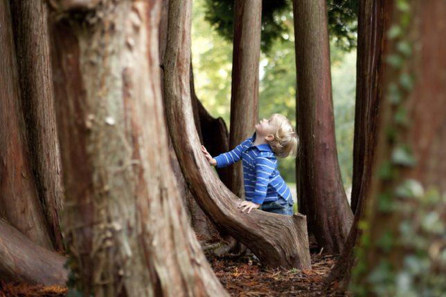 Trouver un producteur de bois